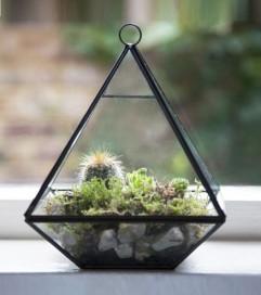 Terrarium pyramide - 29,95 €